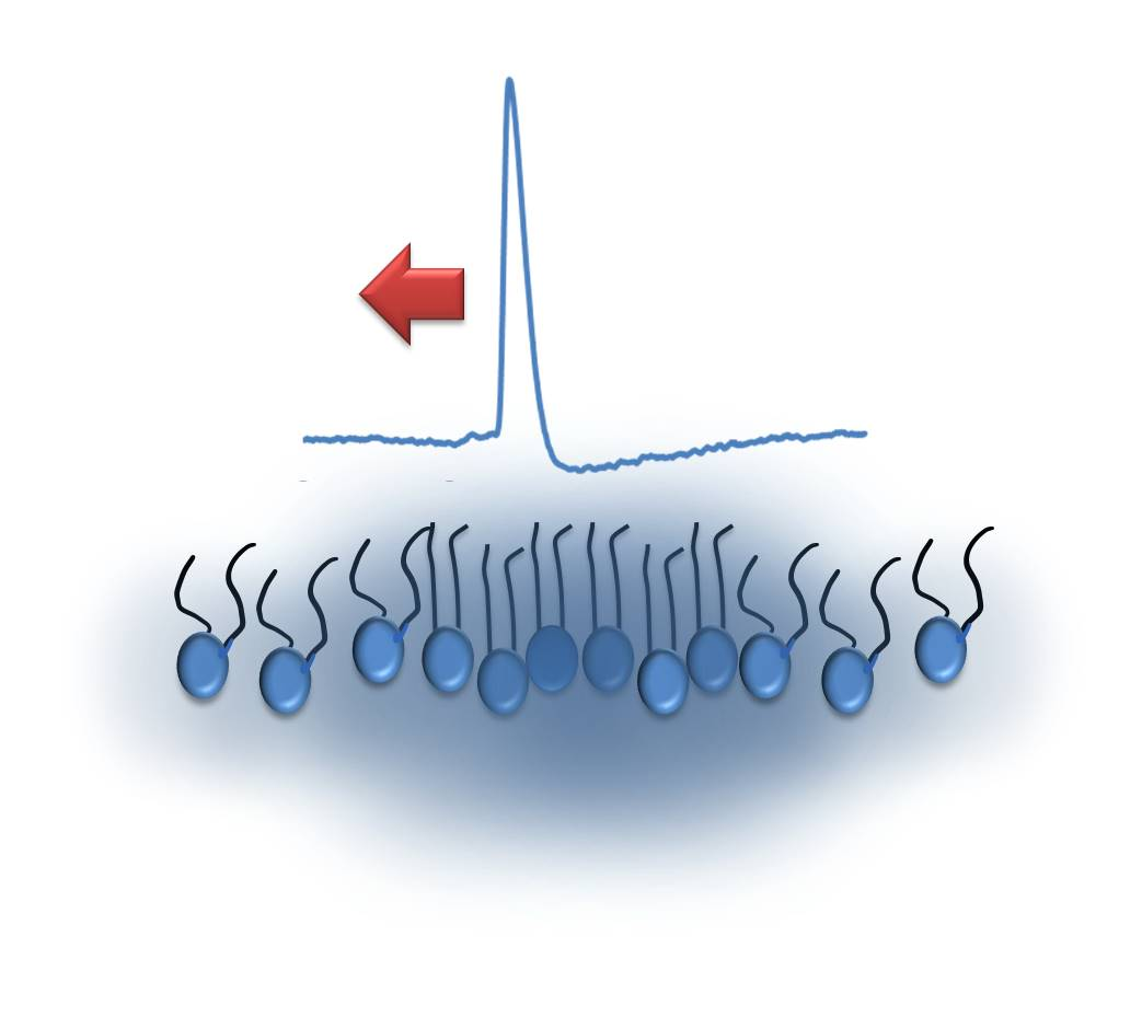 Nonlinear_electro-mechanical_wave_observed_in_single_molecule_thin_film_of_lipids,_using_voltage_sensitive_probes